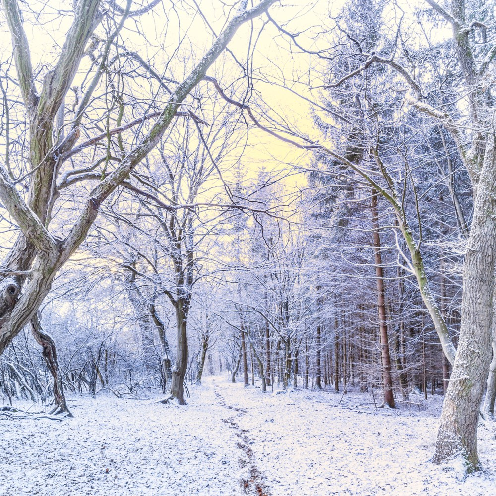 5 Ways to Stay Healthy in Cold Weather