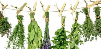 Μάθε τις ασθένειες που θεραπεύει κάθε βότανο! -Πλήρης κατάλογος