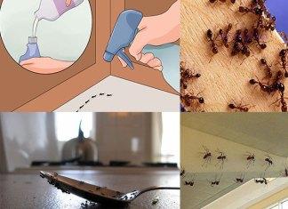 Φυσικός τρόπος για να εξαφανίσετε τα μυρμήγκια από το σπίτι σας