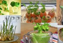 7 λαχανικά που μπορούν συνεχώς να φυτρώνουν, ξανά και ξανά!
