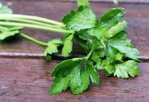 Μαϊντανός: θεραπευτικές ιδιότητες και καλλιέργεια!