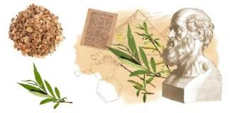 Φύλλα και φλούδα Ιτιάς αντί για ασπιρίνη