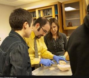 professor demonstrating brain dissection