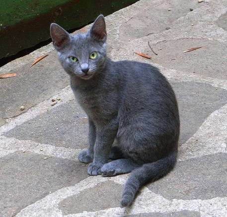 gray cat on stone walkway