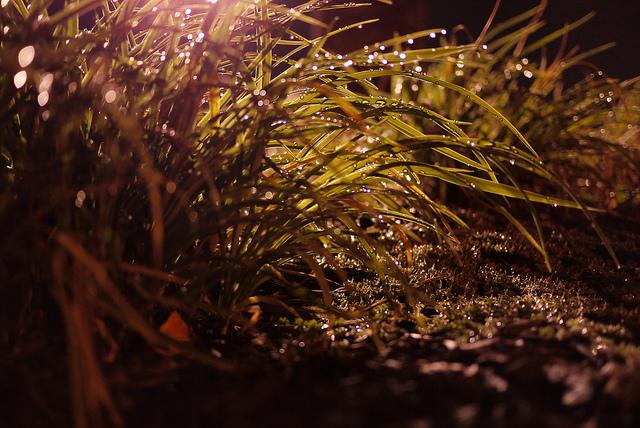 dewy grass