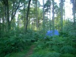 tent set back in woods, can barely see it past ferns and tall trees
