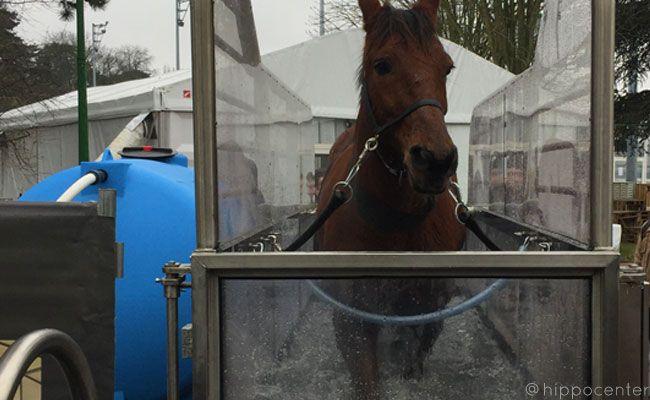 tapis roulant aquatique pour chevaux
