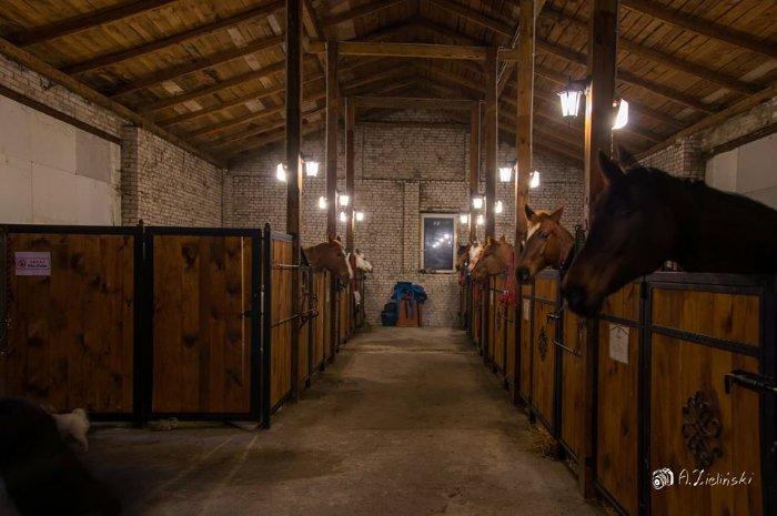 Stajnia Podkowa  pensjonat dla koni  trening koni  rekreacja konna