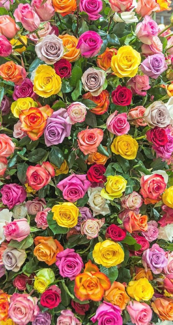 Unduh 900 Wallpaper Bunga Untuk Hp  Paling Baru
