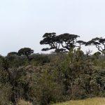 Tropical Montane Forestm Horton Plains