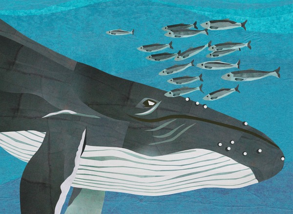 jonathan-woodward-humpback-whale-hai