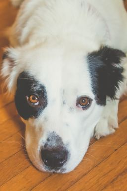 Pet Photography by Courtney Santos of Awkward Eye Photography