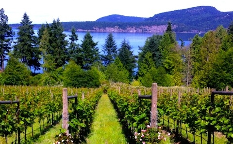 Sea Star vineyard North Pender Island (image supplied)