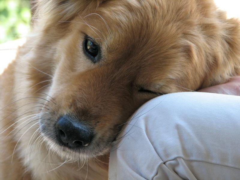 Egyszerre lett rákos a kutyájával, az állat kitartott addig, míg ő meggyógyult