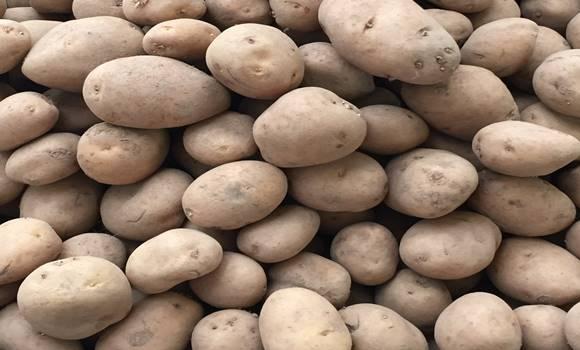 Figyelmeztetés! Rákkeltő lesz a krumpli, ha így tárolod! Soha ne tedd!