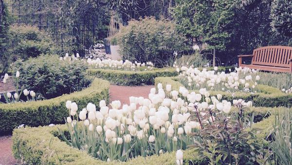 秘密の花園|ザ・シークレット・ガーデン