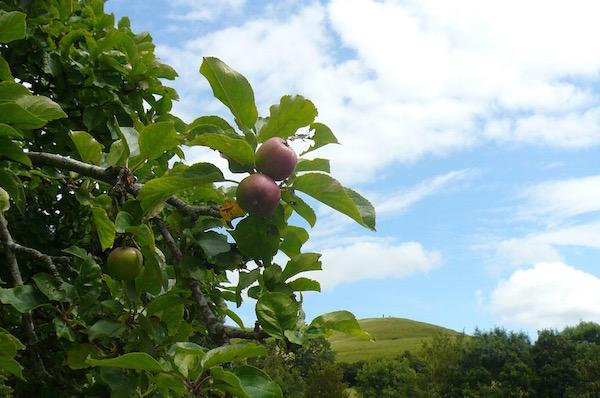 チャリスウェルの庭 リンゴのアーチ|グラストンベリー、イギリス