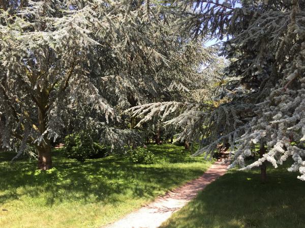 アルベール・カーン美術館の庭、パリ
