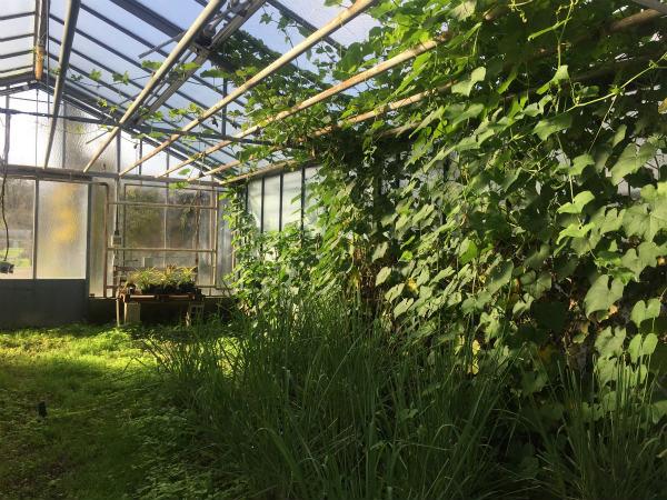 冬の庭のエバー・グリーン