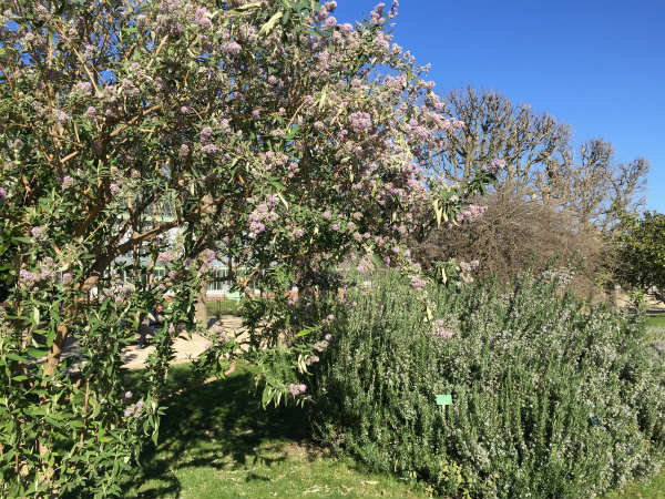 春を待つ庭、パリの植物園、散歩の続き