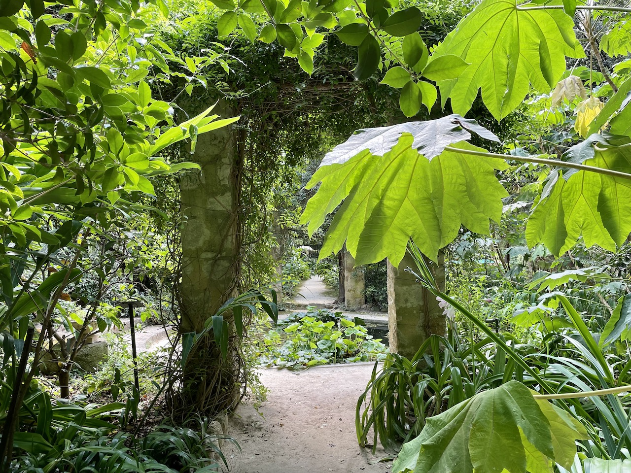 セール・ド・ラ・マドンヌ、南仏リビエラの庭園[2]