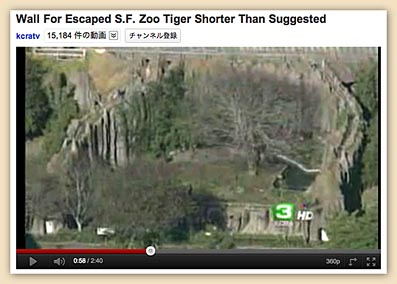 san francisco zoo tiger attack news, tiger attack, tatiana, sam francisco zoo