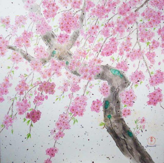 sakura_spring