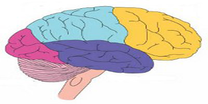 brain-dalam-braininjury.jpg