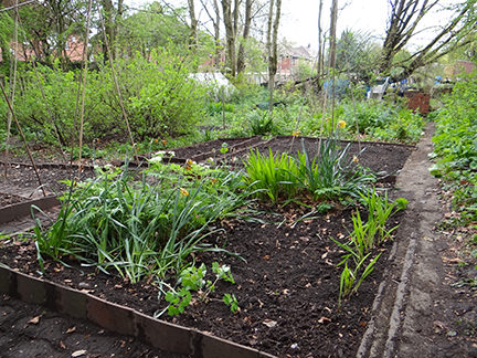 bed on our allotment where we plan to plant flowering bulbs
