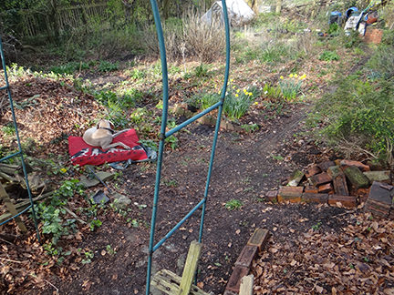 old metal pergola on our allotment