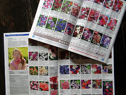 Two seed catalogues open on the sweet pea pages