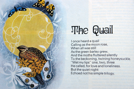 illustration of a quail from a vintage 1970s RSPB magazine