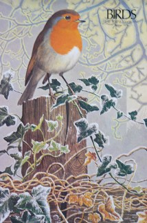 illustration of a robin from a vintage 1970s RSPB magazine