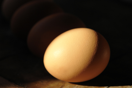 eggs in shadow
