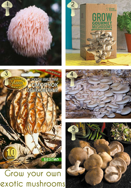 selection of five different grow your own exotic mushroom kits