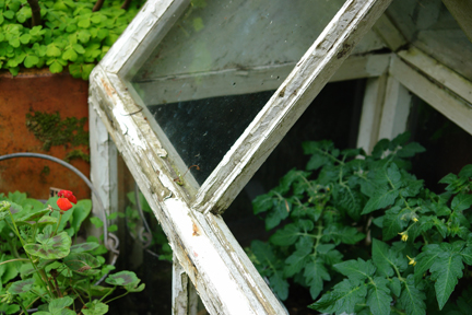 tomato plants growing in a vintage mini greenhouse