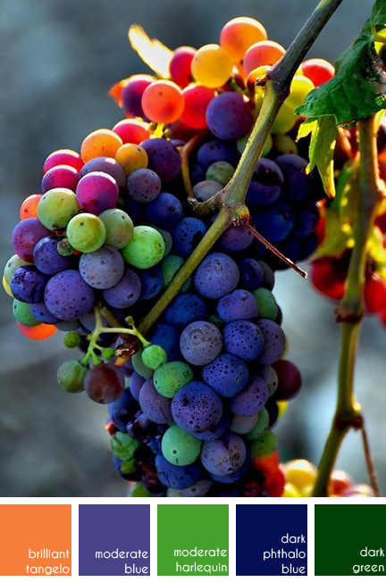a bunch of multicoloured grapes on the vine