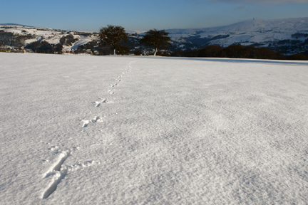 footprints across a snowy field