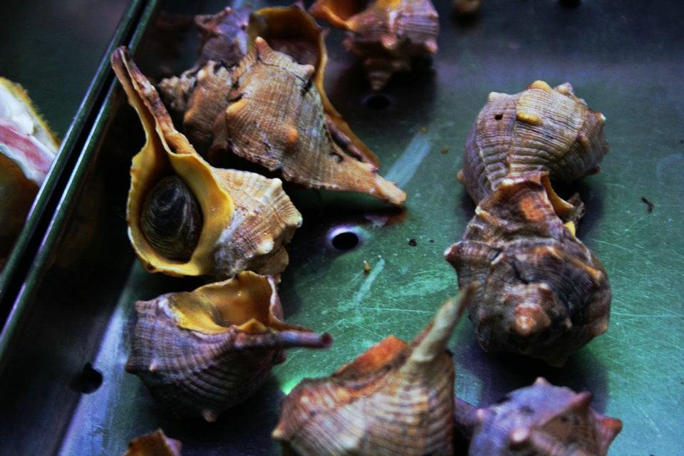Púrpura de Tiro – HiSoUR Arte Cultura Historia