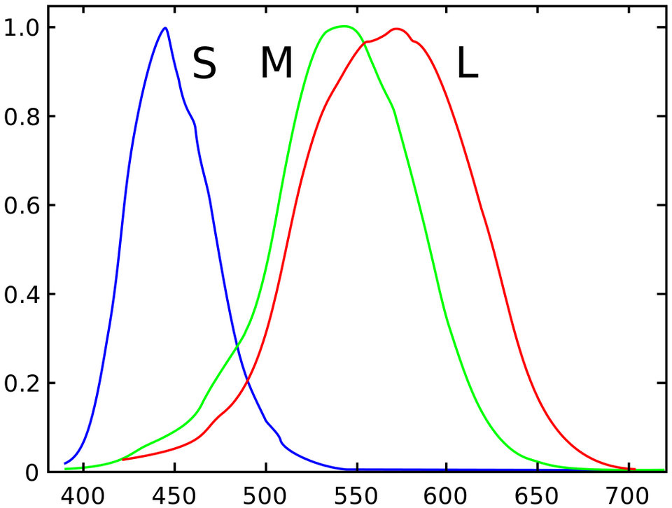 Spectral-sensitivity.jpg?w=960&ssl=1