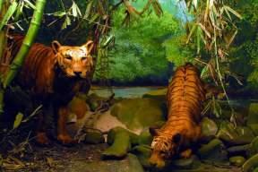 Natural history section, Museum of king Shivaji, India