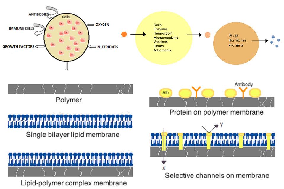 ARN biología en cáncer y otras enfermedades que imitan la diabetes