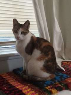 Historias de tres gatas en Lake Balboa: Rosie