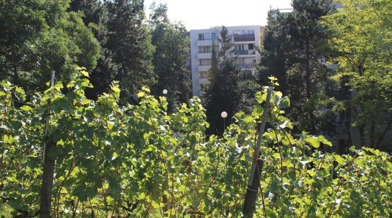 jardin de la butte Bergeyre