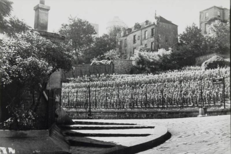 La Vigne de Montmartre, vue prise de la rue des Saules vers le sud et le carrefour de la rue Saint-Vincent en direction de la rue Cortot
