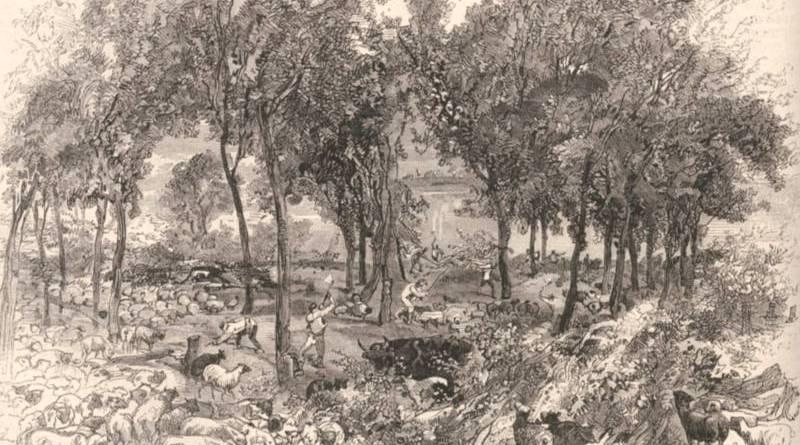 Aspect du bois de Boulogne aux abords des fortifications - extrait du Monde illustré du 10 septembre 1870