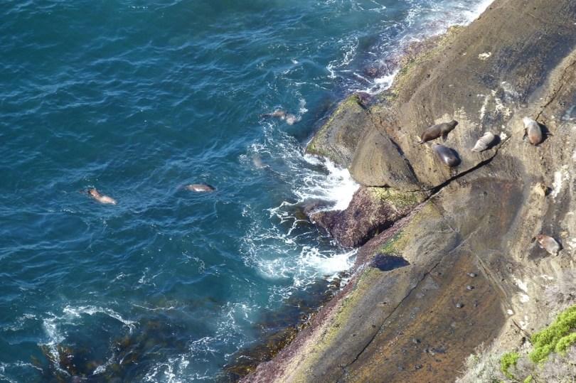 Les phoques à la baignade