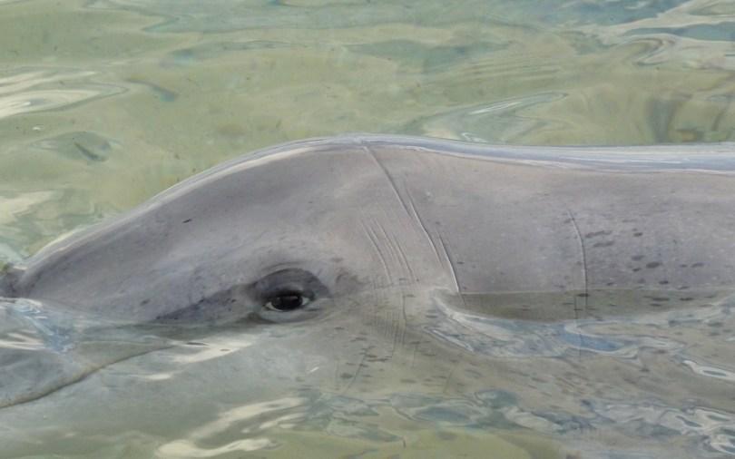L'oeil d'un dauphin