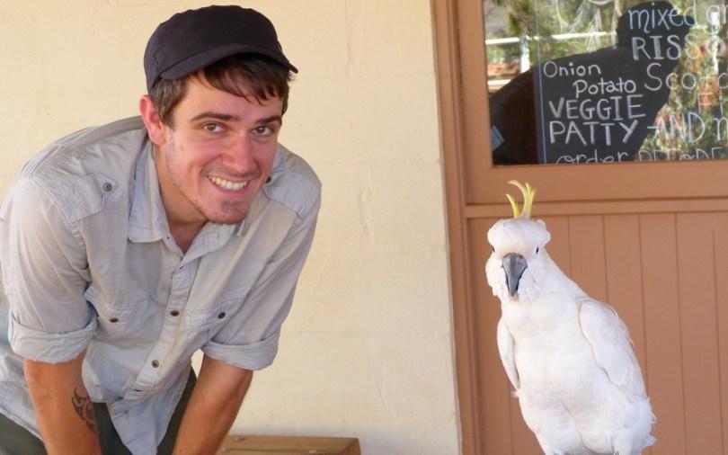Un perroquet du Kings Creek Station