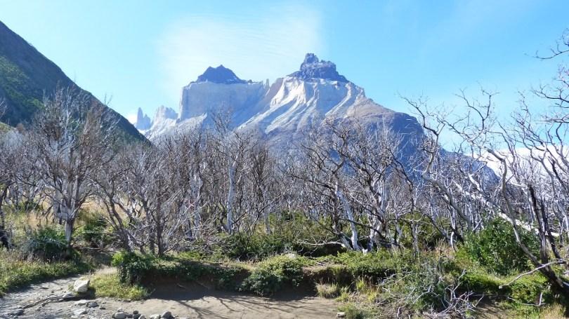 Foret Cuernos del Paine